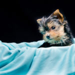 fotografo de perritos
