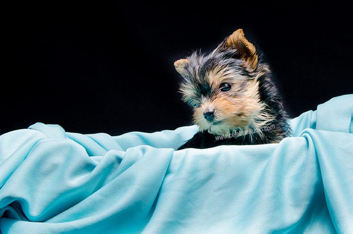 Fotógrafo de Perritos y Mascotas